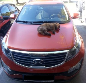Na aute kvetinárky z Trebišova ležal mŕtvy pes s ružou v papuli
