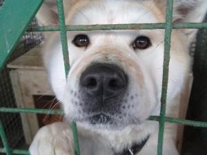 V trebišovskej Karanténnej stanici strávi Vianoce množstvo nechcených psíkov