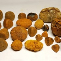 Cow/ Ox Gallstones available